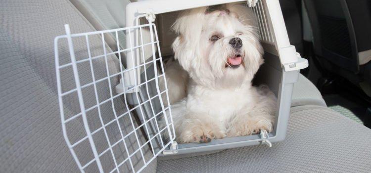 5 erros ao escolher a caixa de transporte para cães