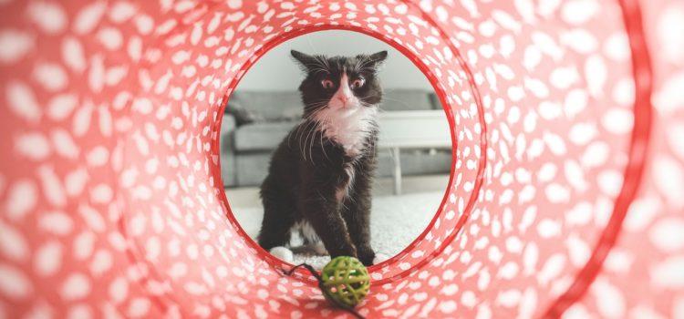 Mimos para o seu gato: Conheça serviços especializados para o seu felino!