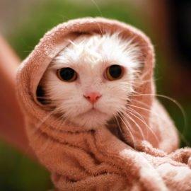 Gatos: 5 dicas para o melhor banho e tosa