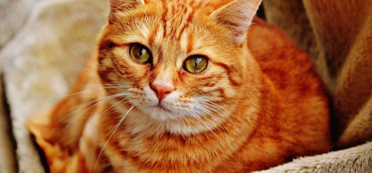 Conheça alguns serviços indicados para o cuidado de gatos