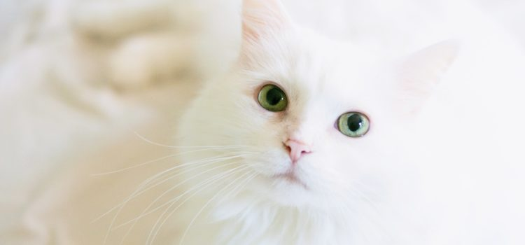 Pet Sitter ou hotel para gatos? O que devo escolher?