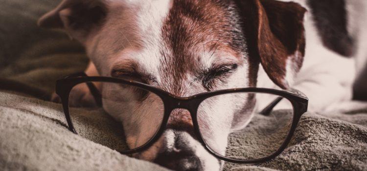 Pets idosos: Quais cuidados os donos devem tomar ao viajar?