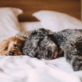 Os hotéis dos sonhos para o seu cachorro