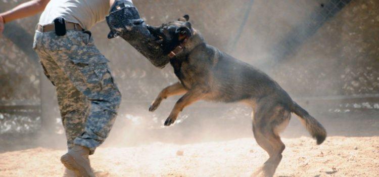 O adestramento de cães bravos e o treinamento de cães de guarda