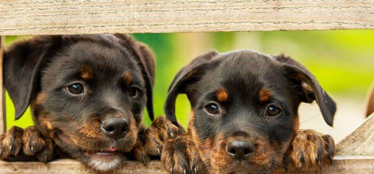 Faça seu cachorro mais feliz!