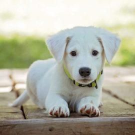 Creche também se tornou lugar para cachorro! Você sabia?