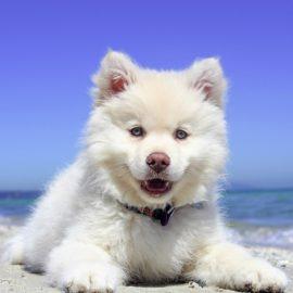 Tudo que você precisa saber a respeito de estética canina