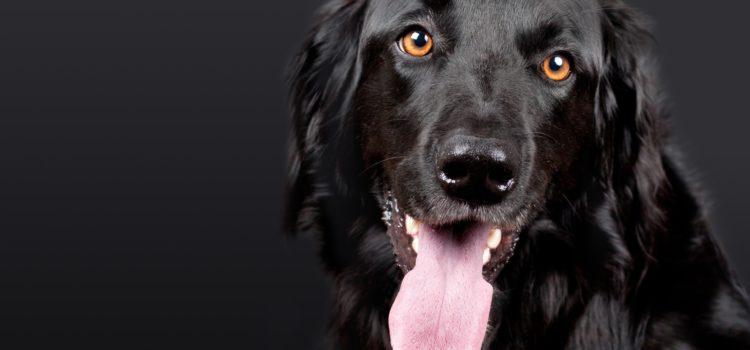 Já sabe quais são todos os benefícios de um cão farejador?