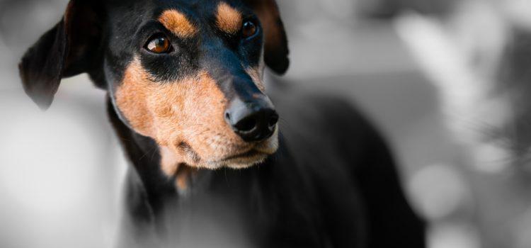Seu cachorro é o centro das atenções? Saiba mais sobre o melhor do mundo pet!