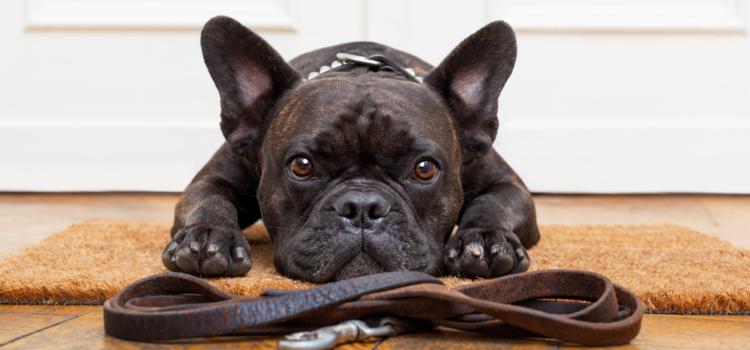 Dicas de adestramento canino