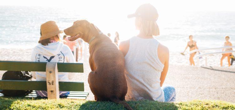5 maneiras para transportar seu cachorro
