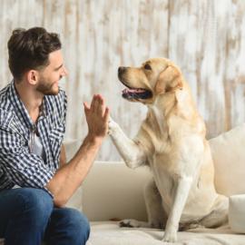 Conheça as atividades ideais para o seu cachorro