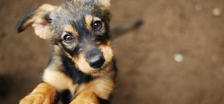 Você já conhece os cachorródromos?