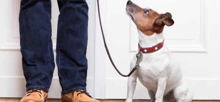 Você já ouviu falar de dog walker?