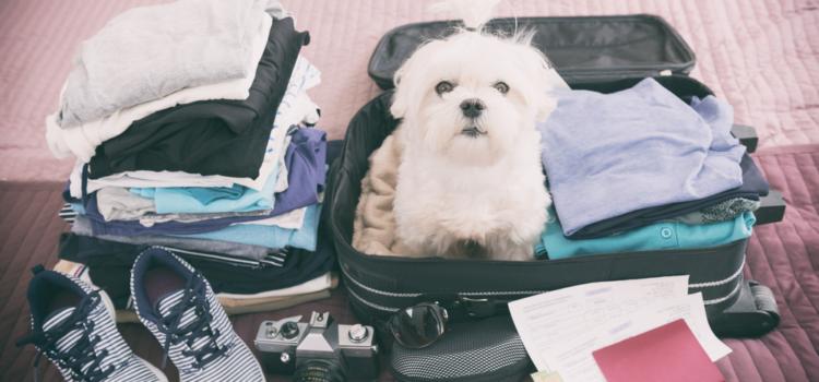 Deixar ou levar o seu pet nas férias?