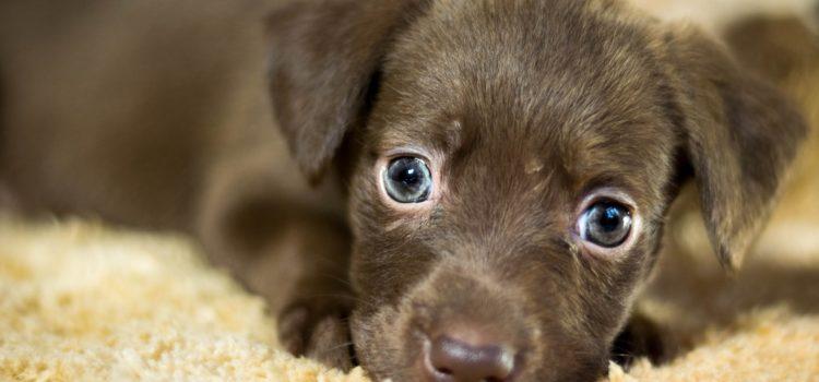 Conheça os motivos para adotar um animal