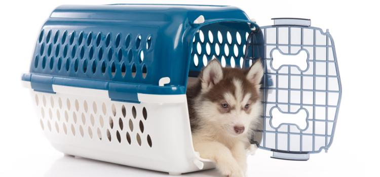 Caixa de transporte para cães e suas variedades