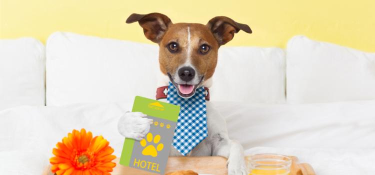 Produtos e serviços de luxo para cães