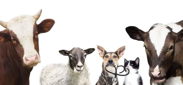 Conheça os itens essenciais para o mundo animal