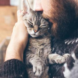 Conheça os serviços necessários para o seu gato