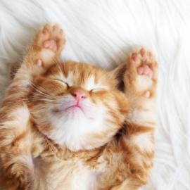 5 dicas para o melhor banho e tosa do seu gato