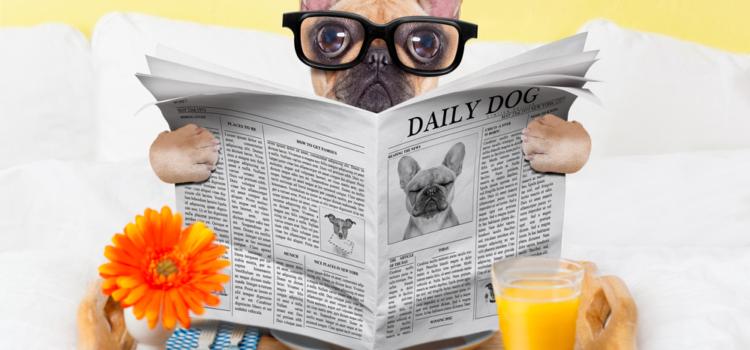 Você já conhece sobre hotéis para cães?