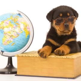 Veja as opções para o seu animalzinho tirar férias